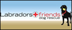 LABRADORS AND FRIENDS DOG RESCUE